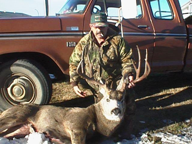 MULEY1.jpg (206777 bytes)